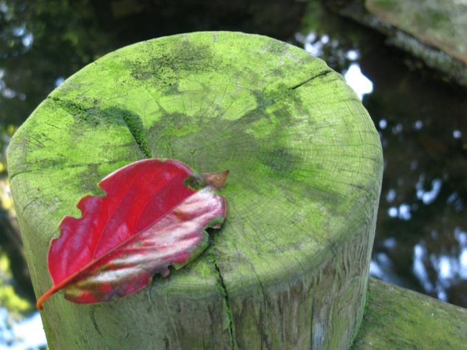 Leaf Offering