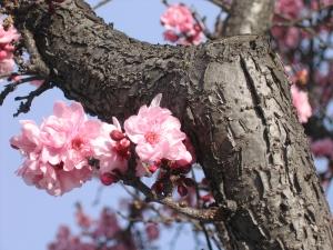 Spring Arrives with Ostara
