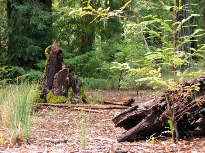 Stump and Log