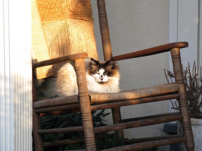 Cat waiting.