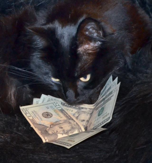 Cat_Cash2
